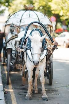 Fiaker da carrozza tradizionale in europa