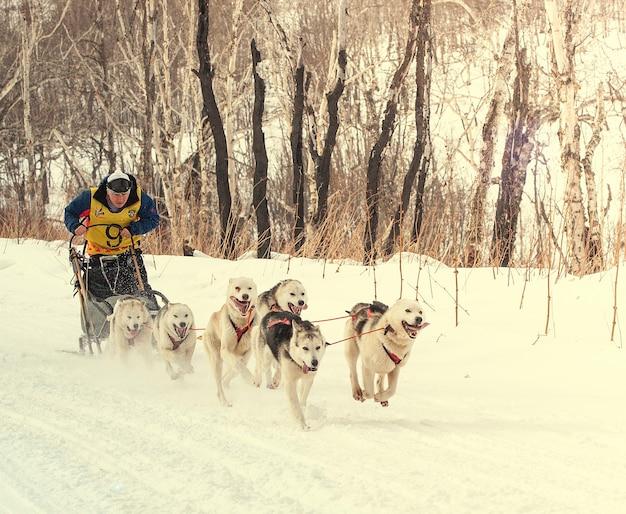 Sprint elizovsky della gara di slitte trainate da cani della kamchatka tradizionale