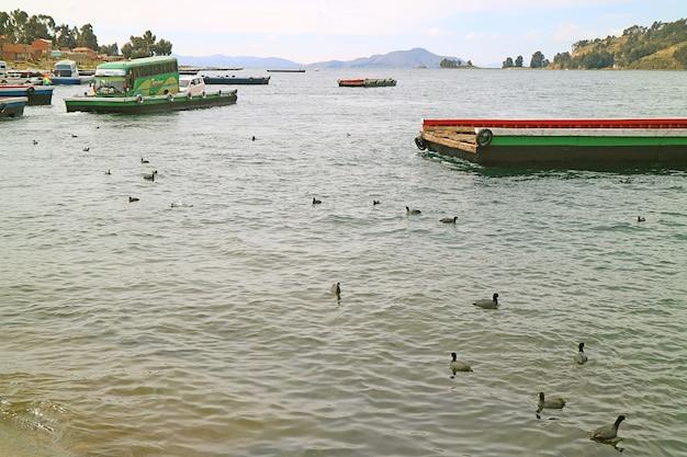 Traffico e trasporto sul lago titicaca con stormo di folaga andina in bolivia