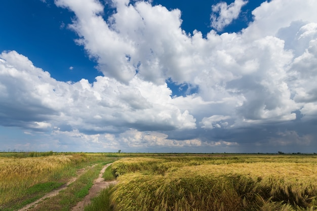 Sentiero lungo il campo di grano, paesaggio fuori dai campi della città dell'ucraina