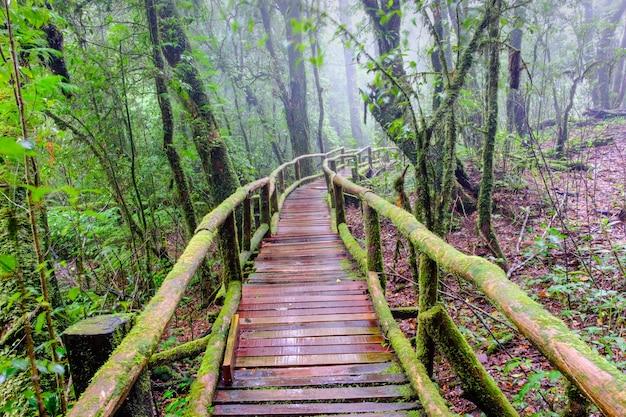 Sentiero a piedi il modo di camminare al parco nazionale nella foresta sempreverde di montagna Foto Premium