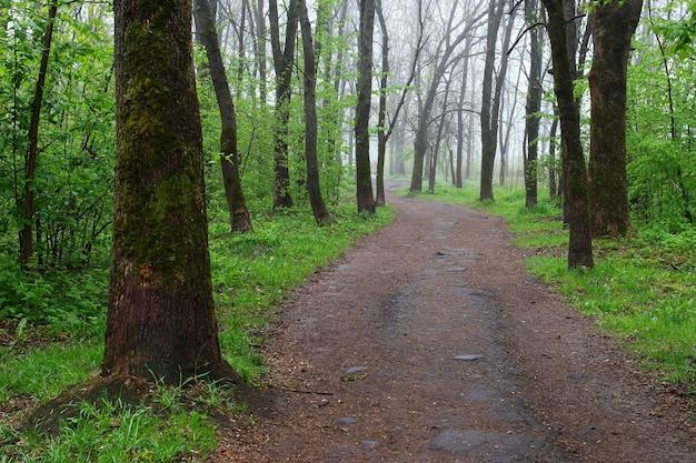 Sentiero nel parco cittadino estivo