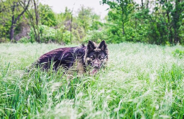 Concetto di addestramento per cani di razza.