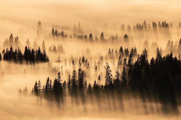 Tranquillo scenario naturale con alberi che spuntano dalla nebbia e proiettano lunghe ombre
