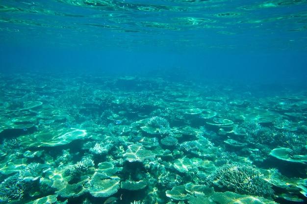 Tranquilla scena subacquea con copia spazio