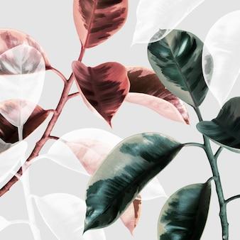 Effetto trasparente su una pianta di gomma indiana