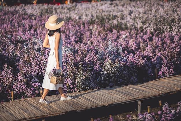 Donna asiatica del viaggiatore che fa un giro turistico sul giacimento di fiori di margaret aster in giardino a chiang mai thailandia