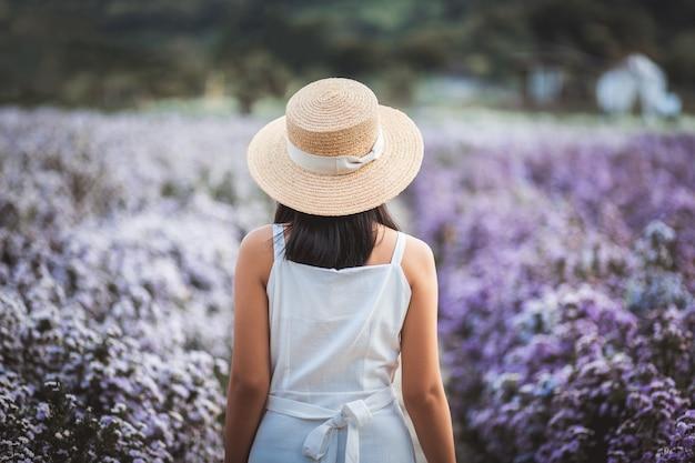 Donna asiatica del viaggiatore con il vestito che fa un giro turistico sul campo di fiori di margaret aster in giardino a chiang mai thailandia