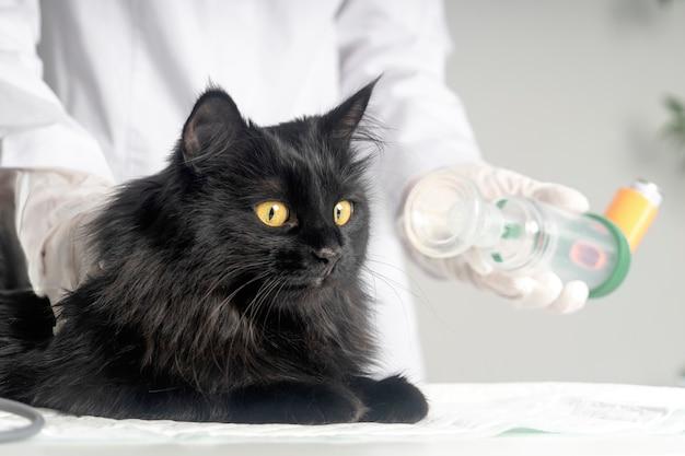 Trattare un gatto per l'asma con un inalatore.