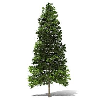 Rappresentazione dell'albero 3d isolata