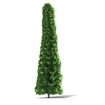 Rappresentazione dell'albero 3d isolata Foto Premium