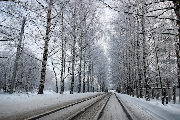Albero lungo la strada in inverno