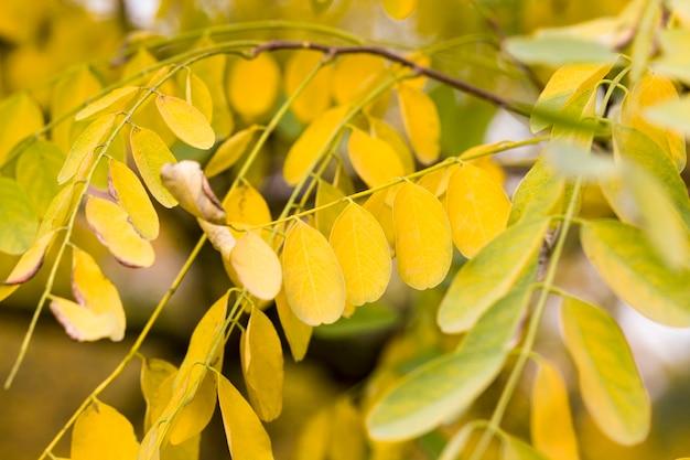 Albero nella stagione autunnale con il primo piano cambiato di colore del fogliame all'inizio dell'autunno