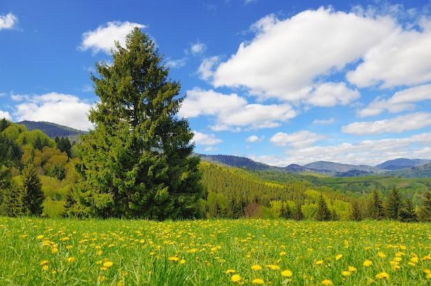 Albero sullo sfondo delle montagne in estate
