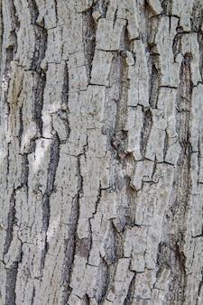 Priorità bassa di struttura della corteccia di albero. tronco d'albero in legno vecchio modello strutturato