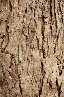 Trama di corteccia di albero uso di texture di legno vecchio grunge per lo sfondo con tonalità di colore.