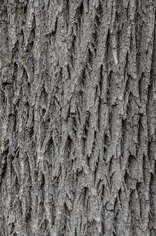 Trama di corteccia di albero per lo sfondo.