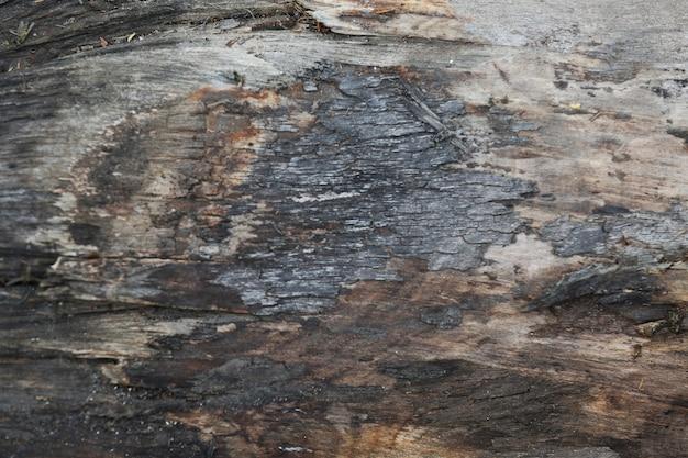 Trama di corteccia di albero