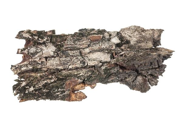 Struttura della corteccia di albero.