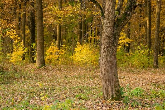 Il tronco della corteccia d'albero cresce nella foresta autunnale