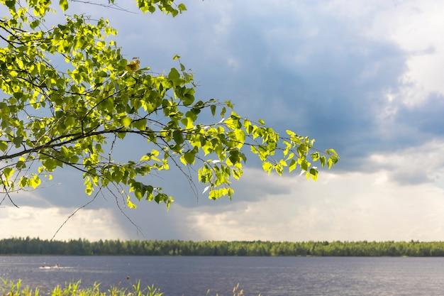 Ramo di un albero alla luce del sole con paesaggio di cielo nuvoloso e soleggiato e lago