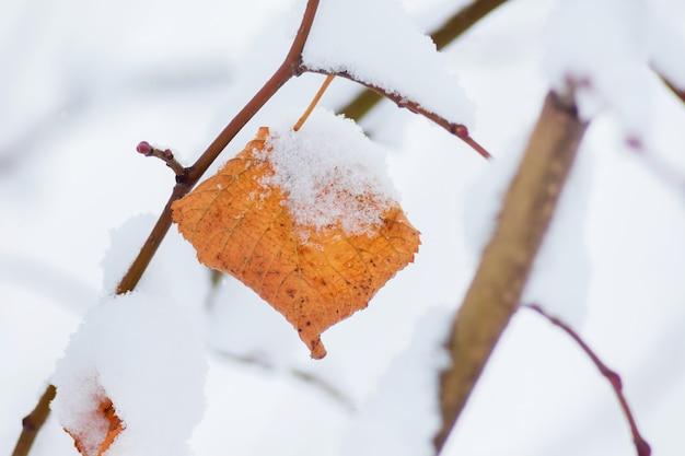 Ramo di un albero con una foglia secca sotto uno spesso strato di neve_