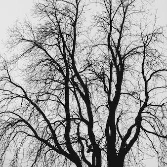 Sfondo di rami di albero stile minimal