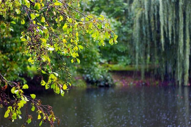 I rami degli alberi pendono sullo stagno del parco cittadino durante la pioggia