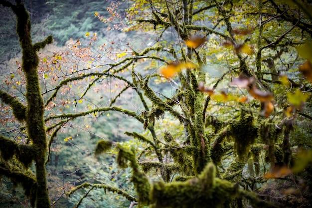Rami di albero in muschio, natura di montagna