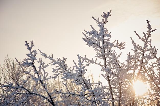 Rami degli alberi nella neve soleggiata giornata invernale.