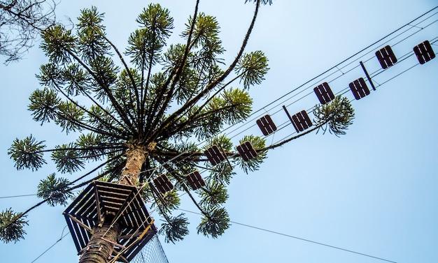 Vista del cielo del passaggio di arrampicata dell'albero