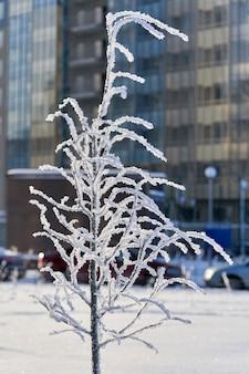 Un albero coperto di inium e neve da un edificio residenziale