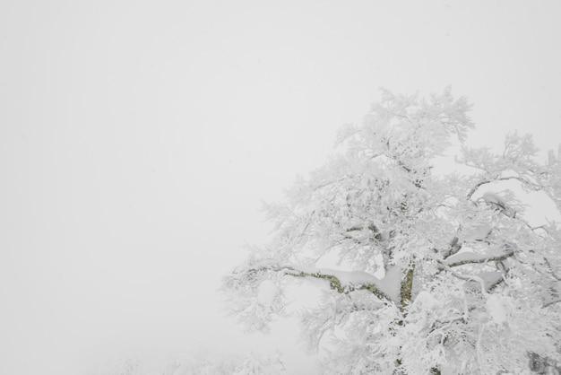 Albero coperto di neve in giornata invernale tempesta nelle montagne della foresta