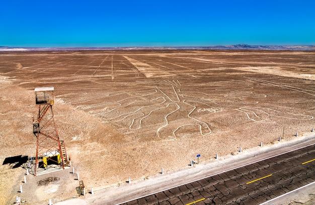 La figura dell'albero a nazca in perù