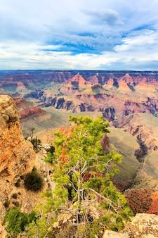 Albero di fronte al grand canyon, arizona, usa