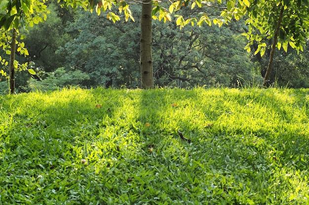 Giorno del parco e del sole del prato inglese dell'erba dell'albero