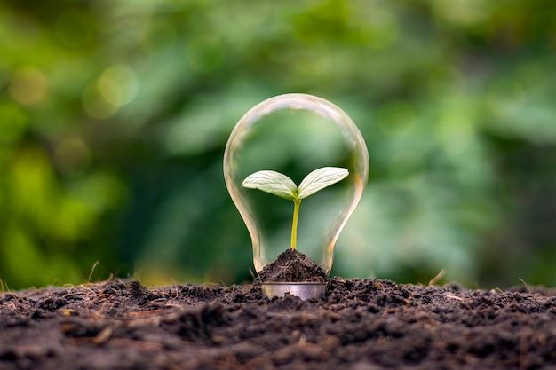 Un albero che cresce in una lampadina ad alta efficienza energetica, il concetto di opzioni energetiche ecocompatibili e sostenibili.