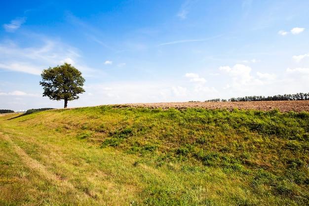 Un albero che cresce in un campo su cui cresce un'erba