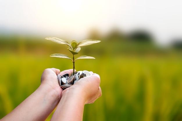 L'albero che cresce dalle monete nelle mani delle persone e lo sfondo verde sfocato della natura iniziano il concetto