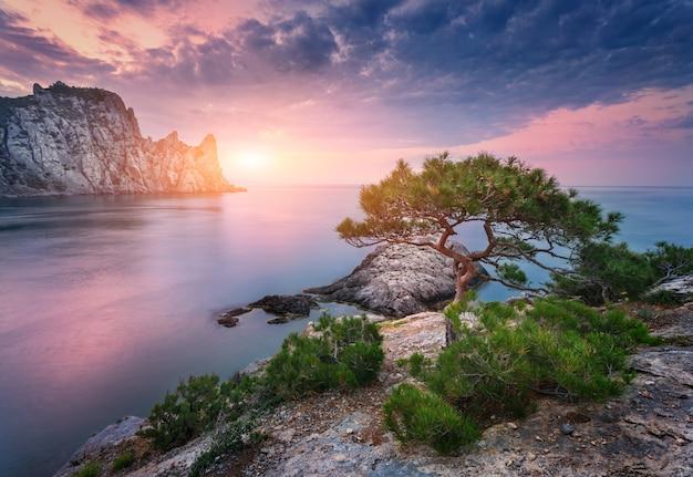 Albero che cresce dalla roccia al tramonto