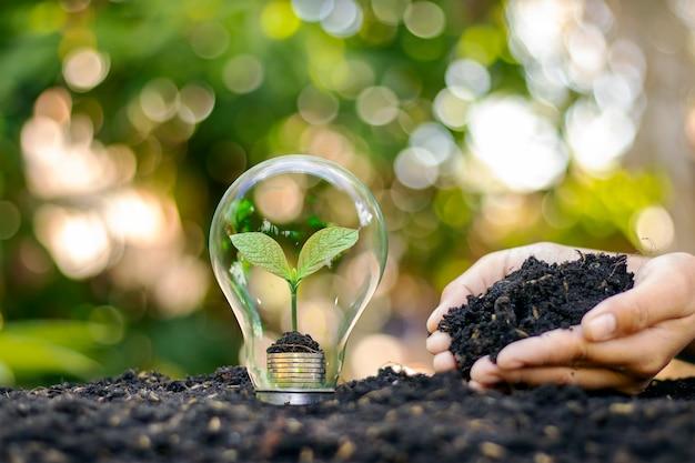 Un albero che cresce all'interno di una lampadina sul suolo e sullo sfondo sfocato