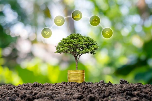 Un albero che cresce su una pila di monete e su uno sfondo verde