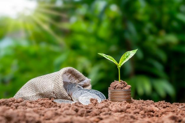Albero che cresce su una pila di monete con un sacco di soldi sul suolo e su sfondo verde, finanza e concetto di crescita economica.