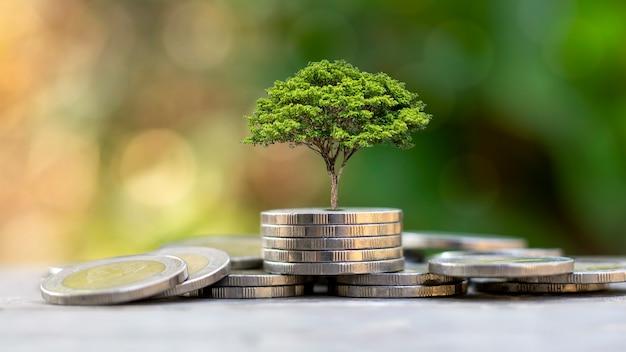 Un albero che cresce su una pila di monete