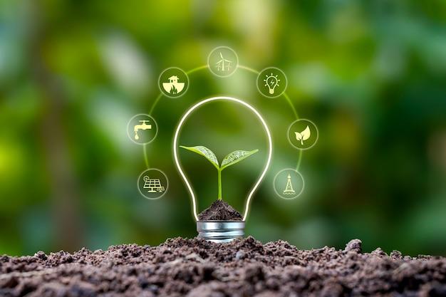 Albero che cresce su suolo e icone di energia rispettose dell'ambiente. concetto di giornata della terra energia rinnovabile per generare elettricità