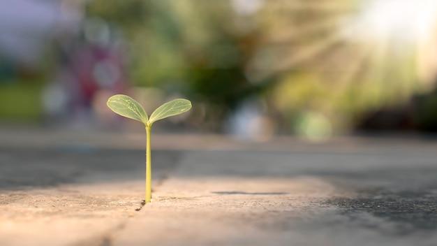 Un albero cresce con pazienza su un pavimento di cemento