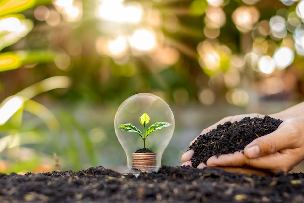 L'albero cresce in lampadine, risparmio energetico e concetto ambientale