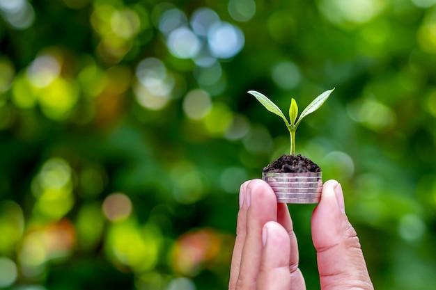 L'albero cresce in modo sostenibile su una moneta nelle mani dell'uomo, compresa la natura verde sfocata
