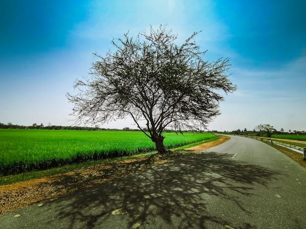 L'albero è isolato dal sole a mezzogiorno.