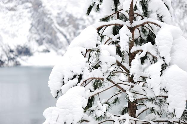 Inverno della neve della foresta del lago tree